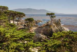 Lone_Cypress_17-Mile_Drive_2013